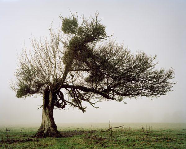 »Arbre« – ruhige, poetische Baumporträts erinnern an die Melancholie der historischen Romantik Fotograf: Alain Cornu
